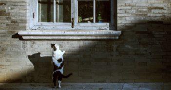 【果子離群索書】愛玩別家老鼠的貓、愛哭的牛,還有愛養雞愛台灣的新疆大媽