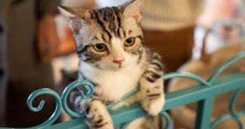 為什麼我的貓會試圖接近朋友中唯一不喜歡貓的那位?